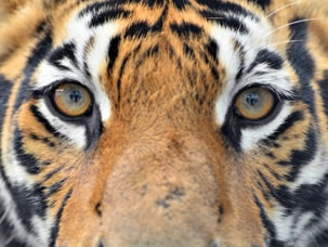 wild animals pictures free images of wild animals royalty free