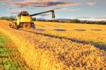Harvesting Combine In The Wheat Field Stock Photo