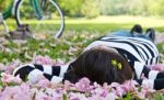 Asian Woman Sleeping On The Grass Stock Photo