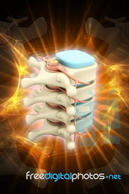 3d Rendered Of Illustration - Human Spine Stock Image