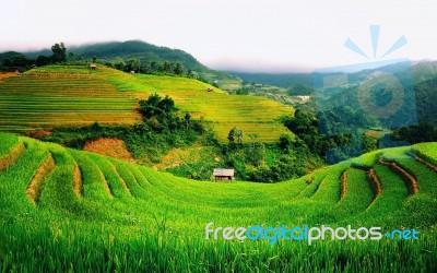 Beautiful Sunrise In Rice Fields Bali Indonesia Stock Photo