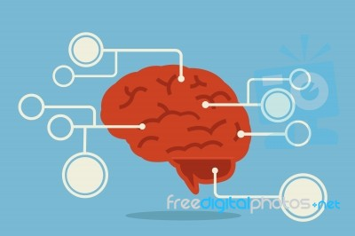 Brain Infographic Stock Image - Royalty Free Image ID 100145416