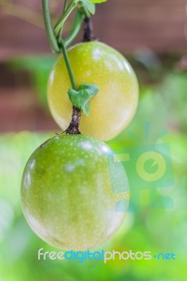 how to tell when passion fruit are ripe