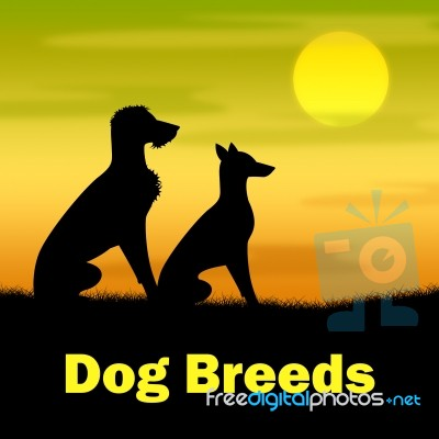 How Much Is A Dog Breeding Licence