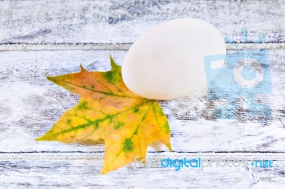 Duck Egg And Yellow Maple Leaf Stock Photo - Royalty Free