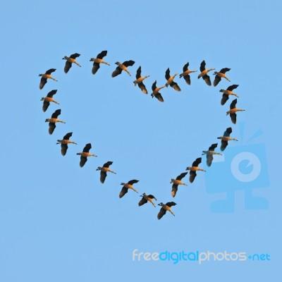 Flock Flying Ducks In The Blue Sky Stock Photo - Royalty ...  Flock