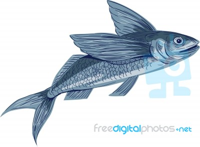 Flying fish drawing stock image royalty free image id for Flying fish drawing