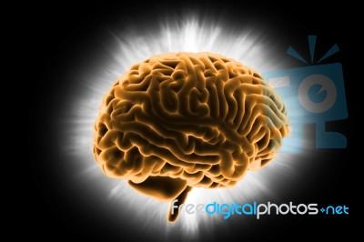 Human Brain 3d Model Stock Image - Royalty Free Image ID