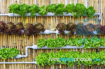 Hydroponic Vertical Gardening Stock Photo Royalty Free Image ID