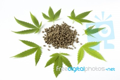 Cannabis seeds norway
